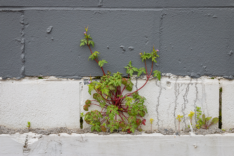 emil_mcavoy-retrace-peripheral_plant_archive-lead_image1v3